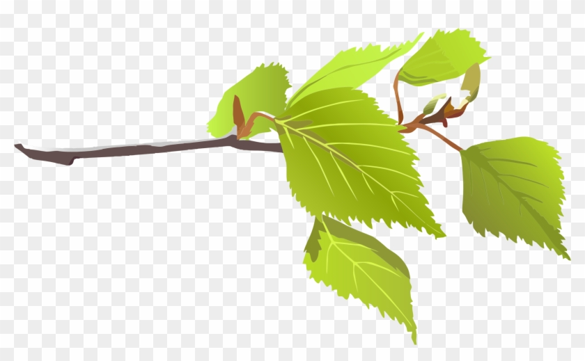 Clipart - Branch With Leaves Png #35025