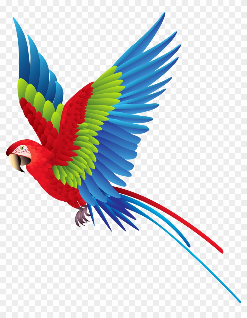 Colourful Parrot Png Clipart - Colorful Bird Png #35173