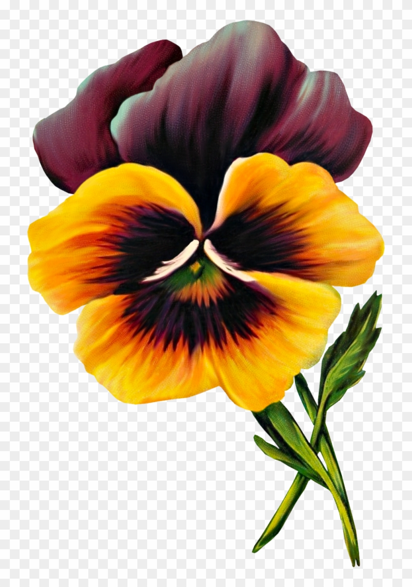 Free Vintage Pansy Graphic - Pansy #35217