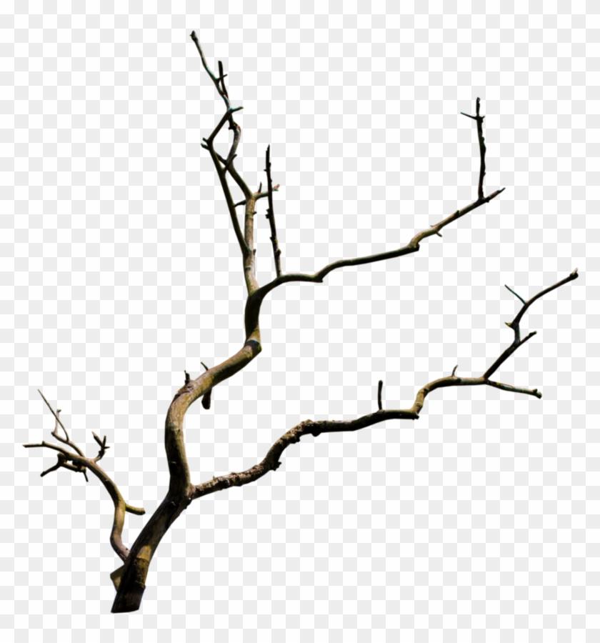 Branch Tree Clip Art - Branch Tree Clip Art #35327