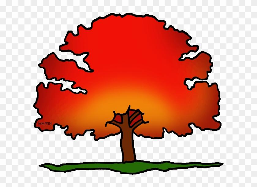 District Tree Of Washington Dc - Washington Dc Scarlet Oak #35497
