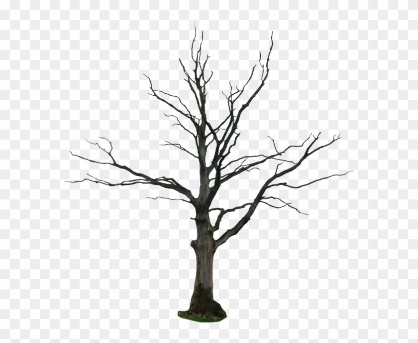 Tree Drawing Snag Clip Art - Tree Drawing Snag Clip Art #35553