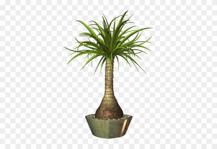 Album - Png Image For Pot Plant #35614