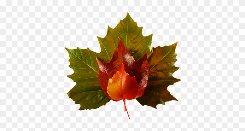 Fall Leaves Clip Art Small Red Yellow Leaf - Maple Leaf Green Png #35791