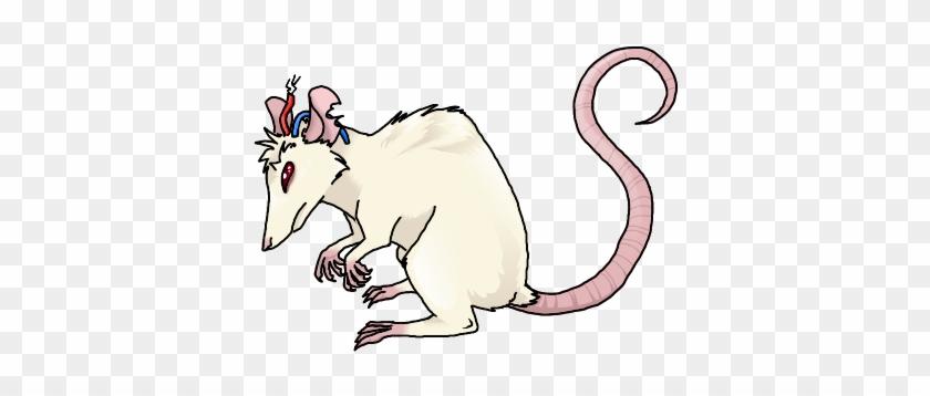 Крысиный король фото помогут пролить