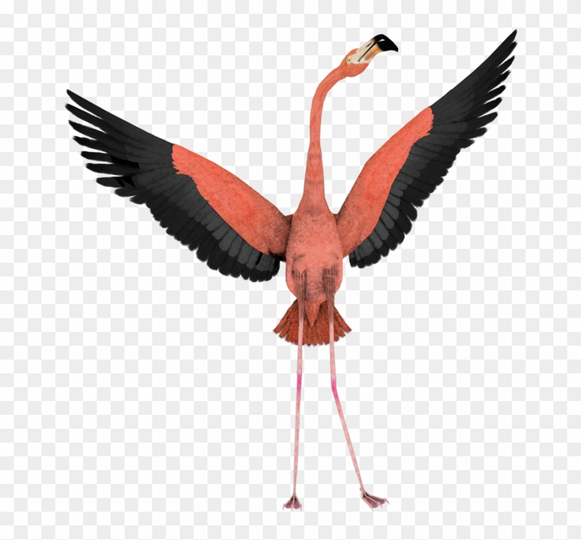 Art Flamingo Wings Wide Open Fly - Flamingo Transparent Background #206031
