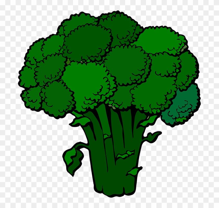 dark broccoli clip art at clker com vector clip art broccoli clipart free transparent png clipart images download dark broccoli clip art at clker com