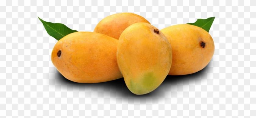 301 3014019 organic alphonso mango alphonso mango