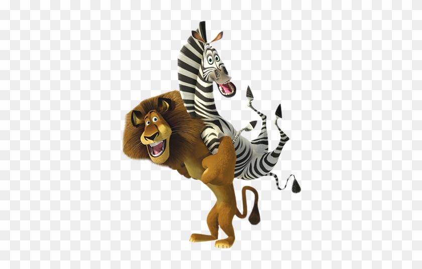кедровые картинки зебра из мадагаскара на белом фоне говорить домашних тренировках