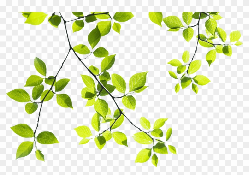 tree branch landscape tree branches png hd free transparent png
