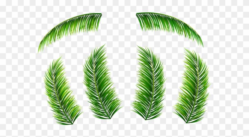 Hojas De Palma Png Clip Art Imagen - Hojas De Palma Png - Free ...