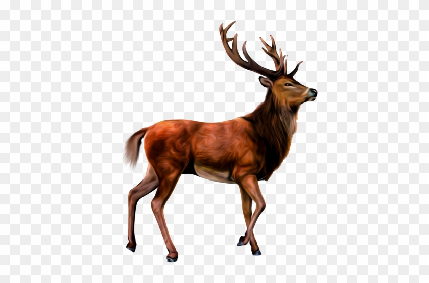 Animals Clipart Png,cartoon Animals Png,cute Animal - Transparent Background Deer Clipart #1323013