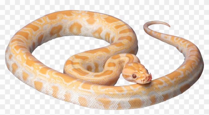 Snake Clipart Photos 10 - White And Orange Snake #1323739