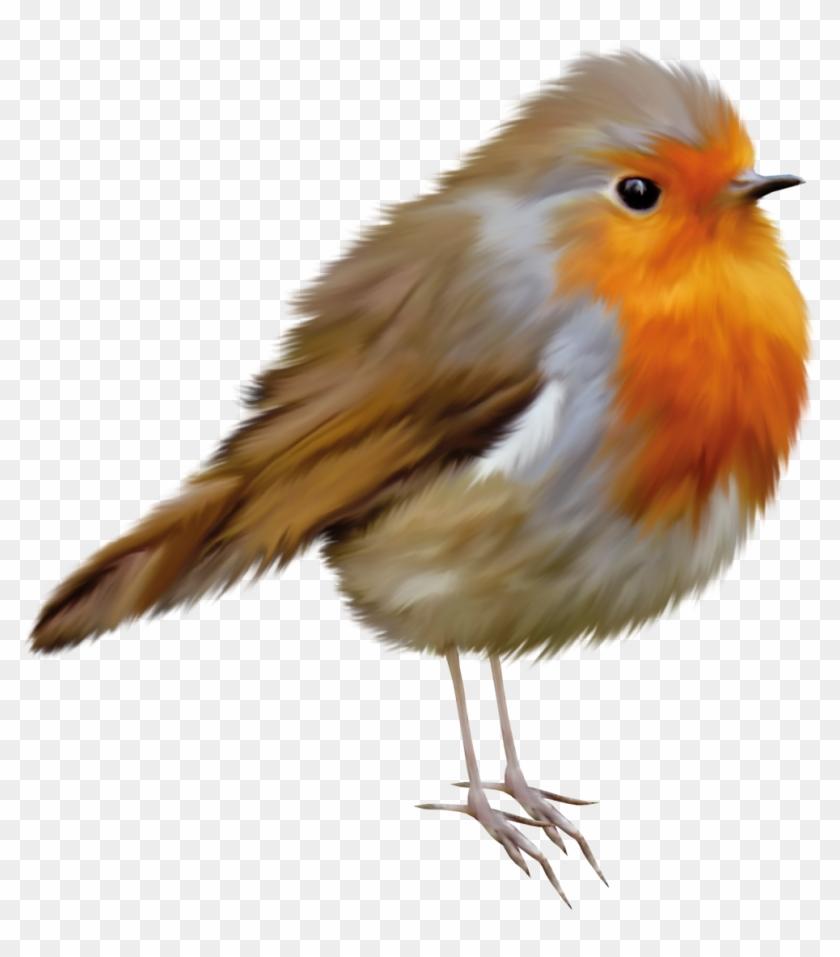 European Robin Bird American Robin Clip Art - Robin Clip Art #1323974
