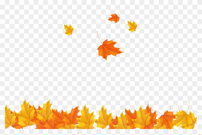 Autumn Leaf Clip Art - Transparent Background Maple Leaves Png #1324432