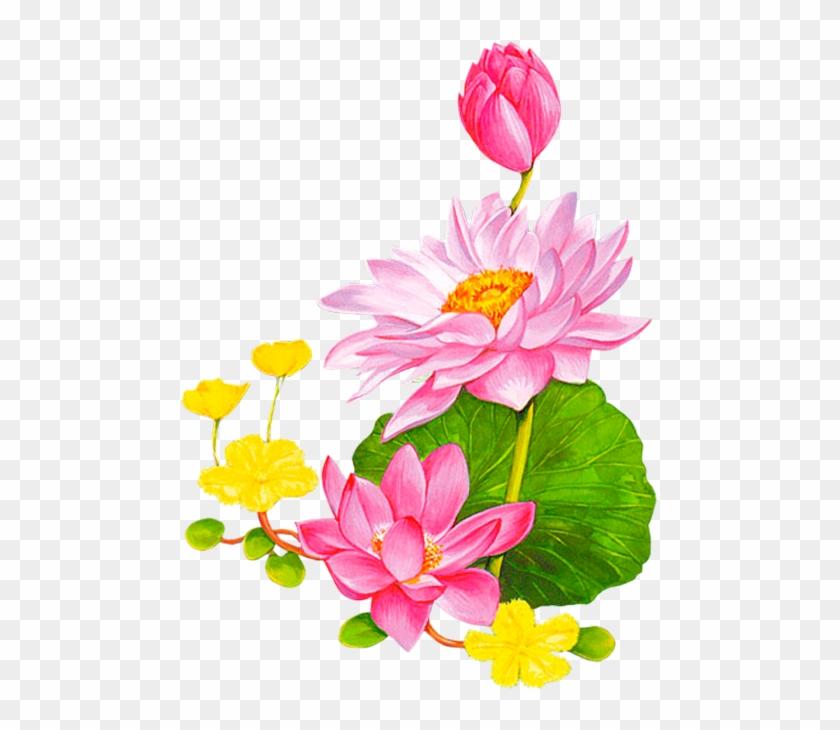 Kwiaty Transparent Lotus Cartoon Free Transparent Png Clipart
