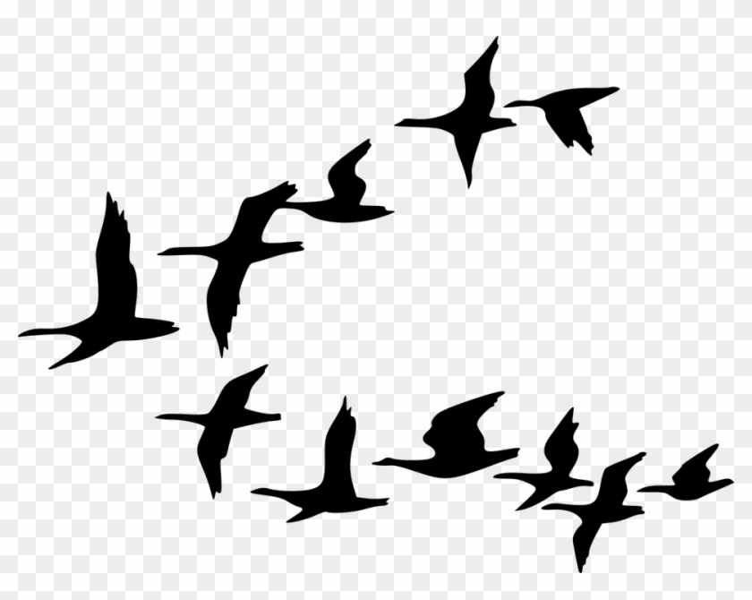 Flock Of Birds Clipart Tree Cartoon Birds Cartoon Black And White