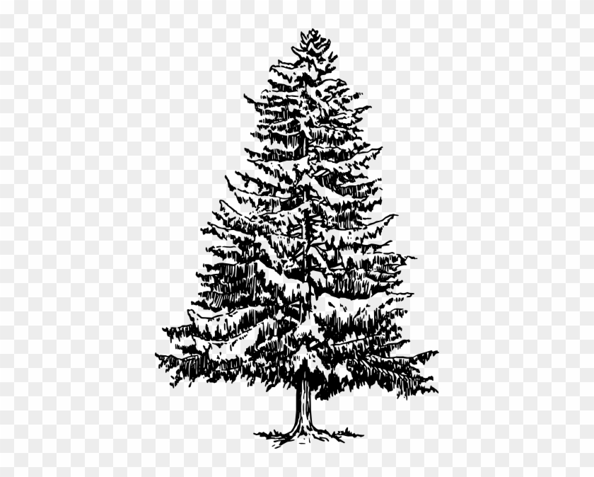 Pine Clipart Black And White Fir Tree Drawing Png Free