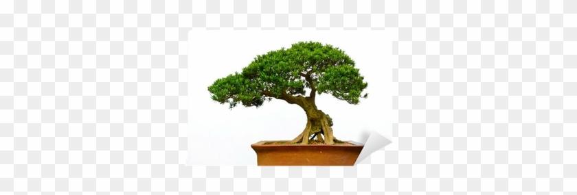 Different Types Bonsai Trees #1330496