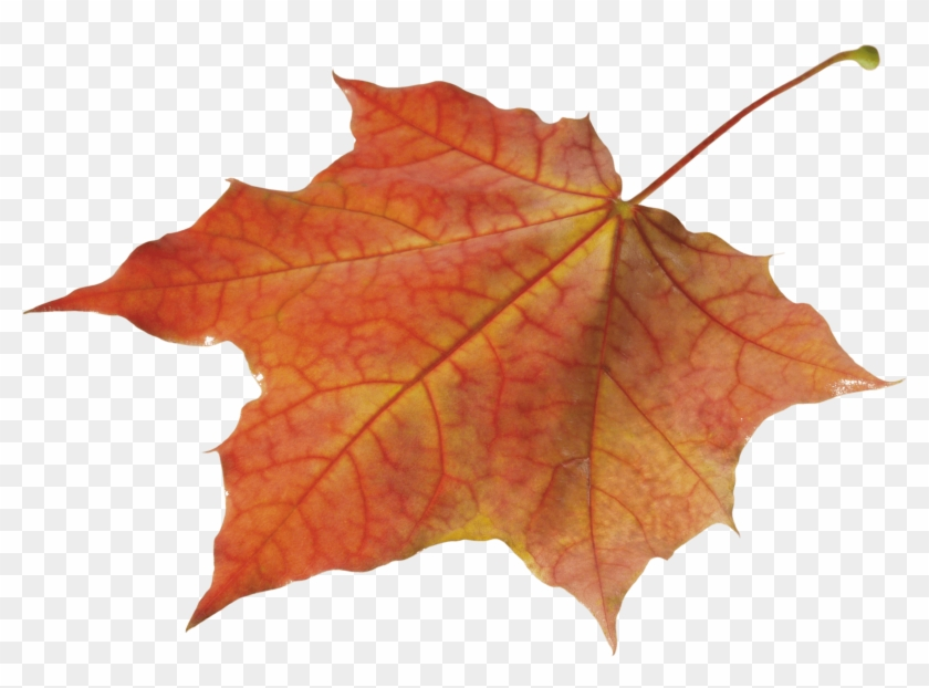 Autumn Leaves Clipart Pile Fall Leaves - Autumn Leaf Png #1330982