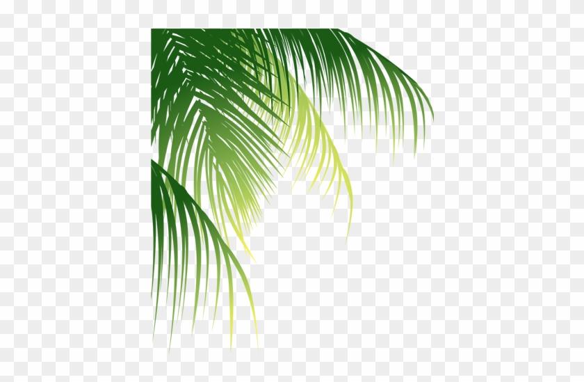 Leaf Arecaceae Euclidean Vector Coconut - Coconut Leaves Png #1333260