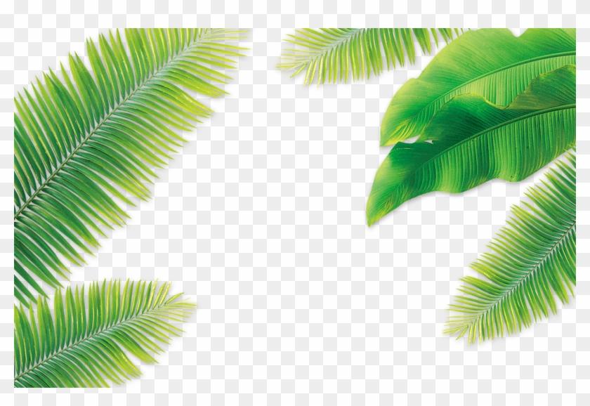 Leaf Coconut Arecaceae - Banana Tree Leaves Png #1333276