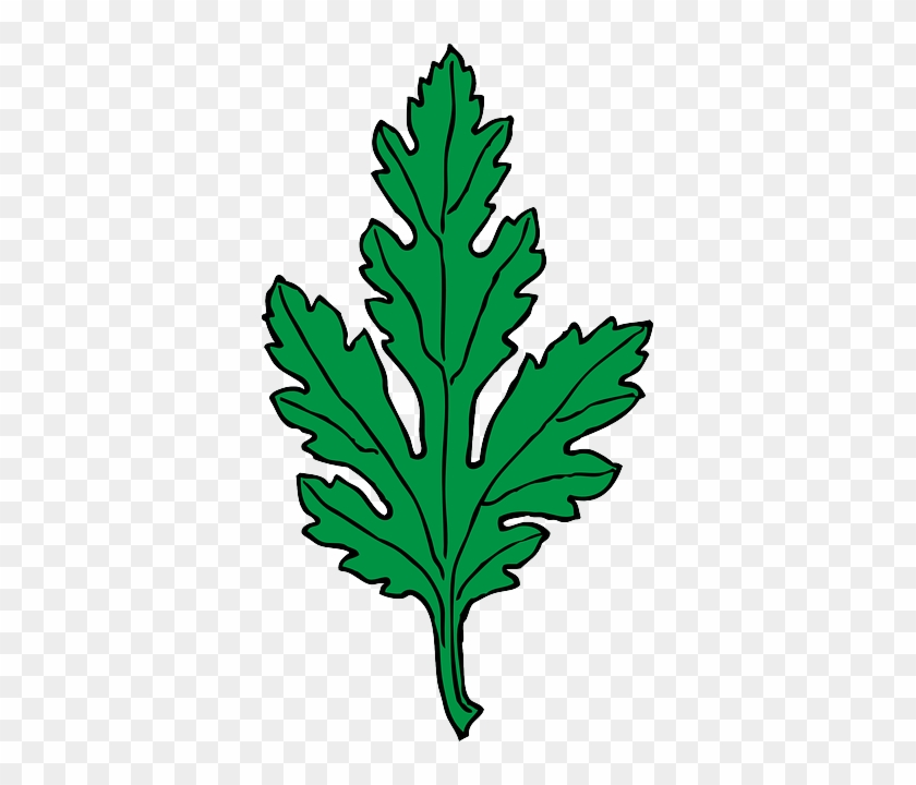 Chrysanthemum Green, Leaf, Cartoon, Plant, Leaves, - Green Leaf Clip Art #1333563