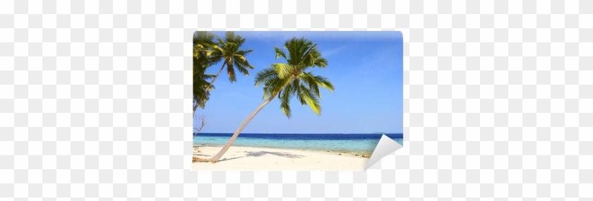 Palmeras En La Playa #1334472