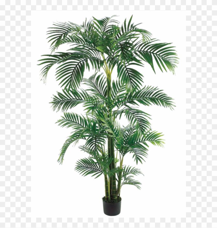 7' Tropical Kentia Palm Tree In Plastic Pot Green - Silk Plants Direct Kentia Palm Tree - Green - Pack #1334755