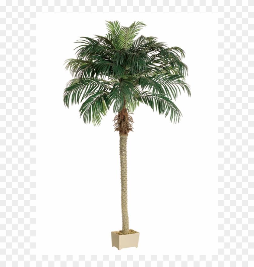 8' Phoenix Palm Tree In Rectangular Plastic Pot - Silk Plants Direct Phoenix Palm Tree - Green - Pack #1334771