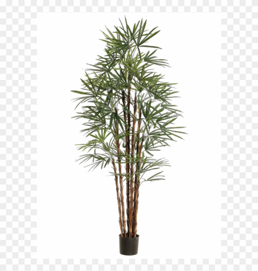 "6"" Honey Rhapis Palm Tree X10 In Plastic Pot Green - Silk Plants Direct Rhapis Palm Tree - Green - Pack #1334782"