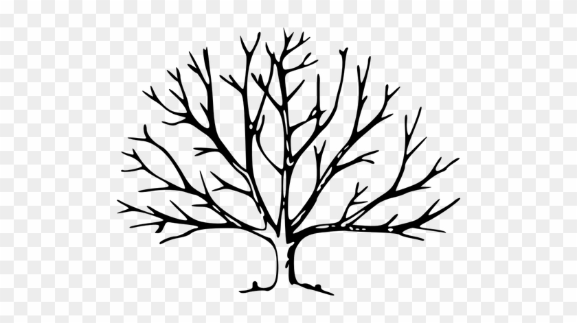 Tree With Roots Vector Graphics - Tree With No Leaves #1335196