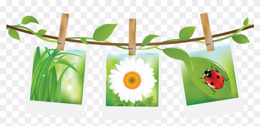 Ladybugs And Daisies Gif Anime Printemps Gratuit Free Transparent Png Clipart Images Download