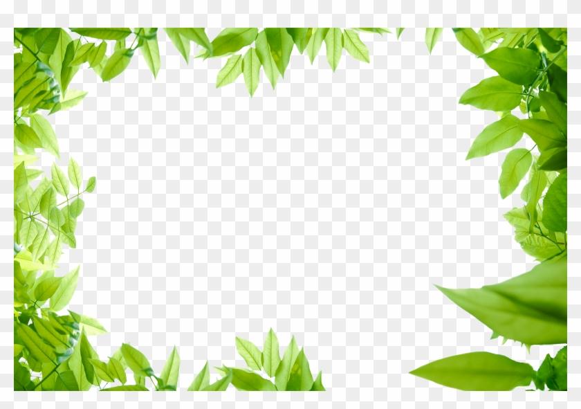 Leaves Png Images Transparent Free - Green Leaf Border Png #1335831