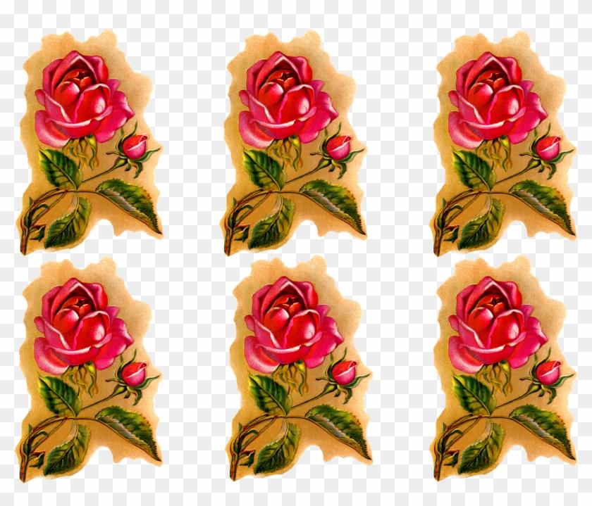Rose Flower Downloads Clip Art - Garden Roses - Free