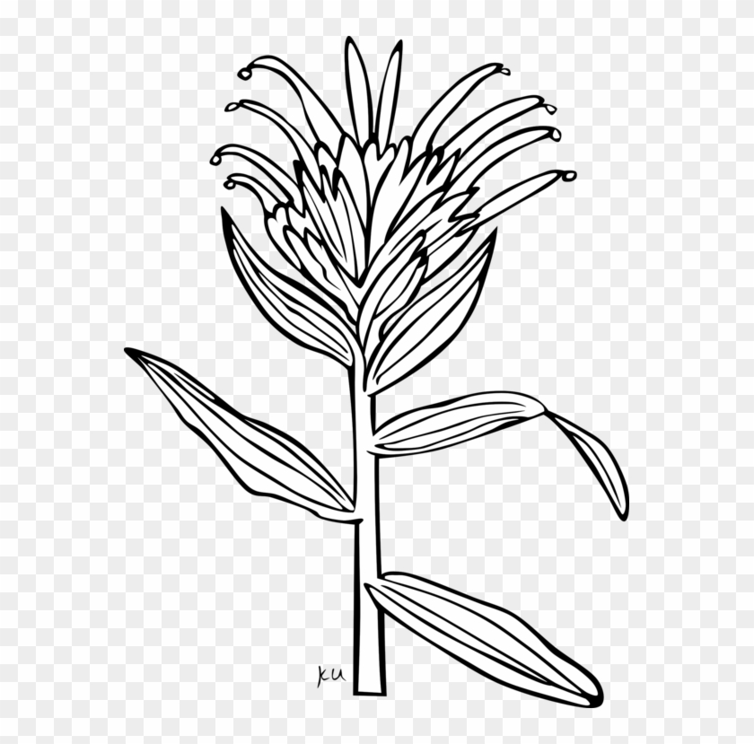 All Photo Png Clipart - Indian Paintbrush Coloring Page #1344533
