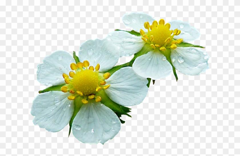 Tattys Thingies Flowers Foliage Contoh Bunga Tidak Sempurna Free Transparent Png Clipart Images Download