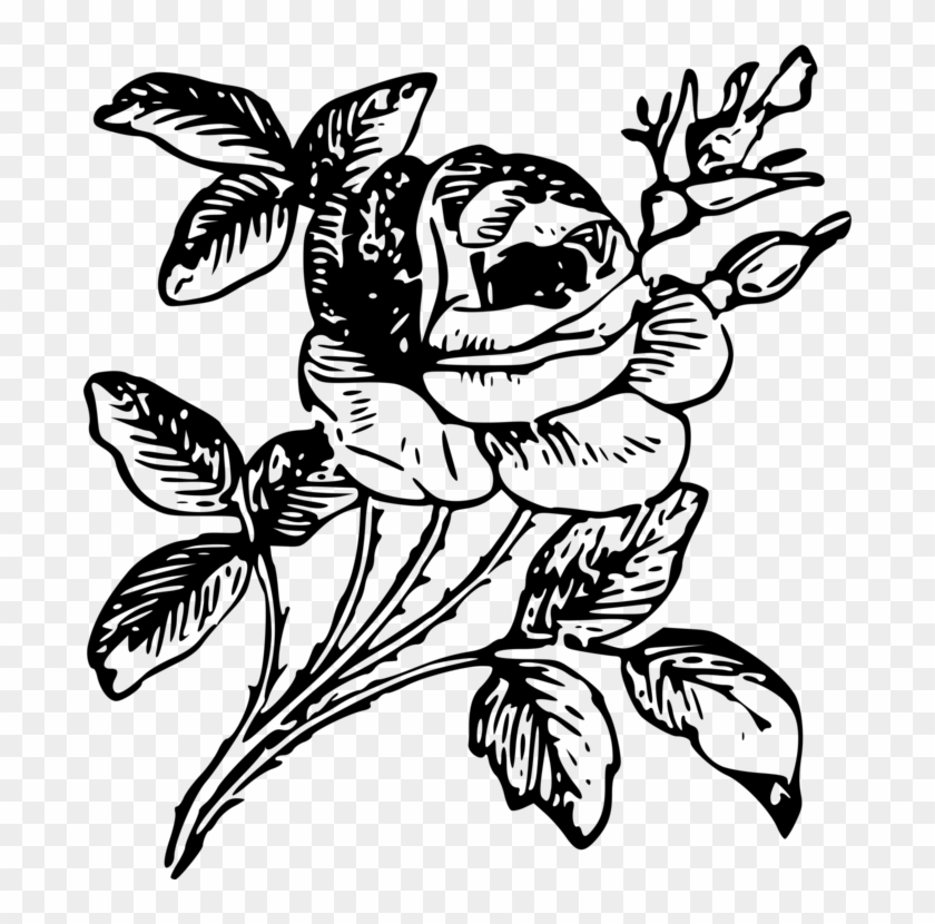 Drawing Floral Design Rose Flower Art Png Of Rose Drawing Free