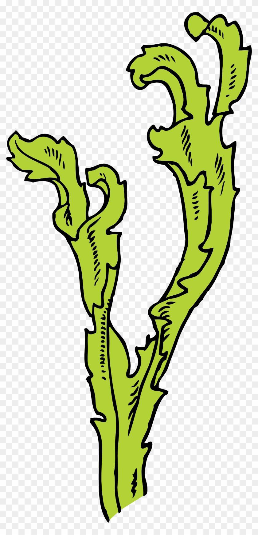 Seaweed Clipart - Seaweed Clip Art #1350752
