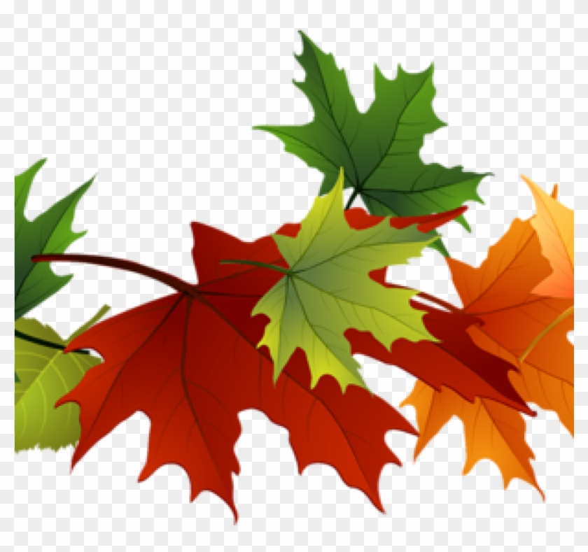 Fall Foliage Clipart Fall Foliage Clipart Fall Transparent - Fall Color Leaves Clipart #1354441