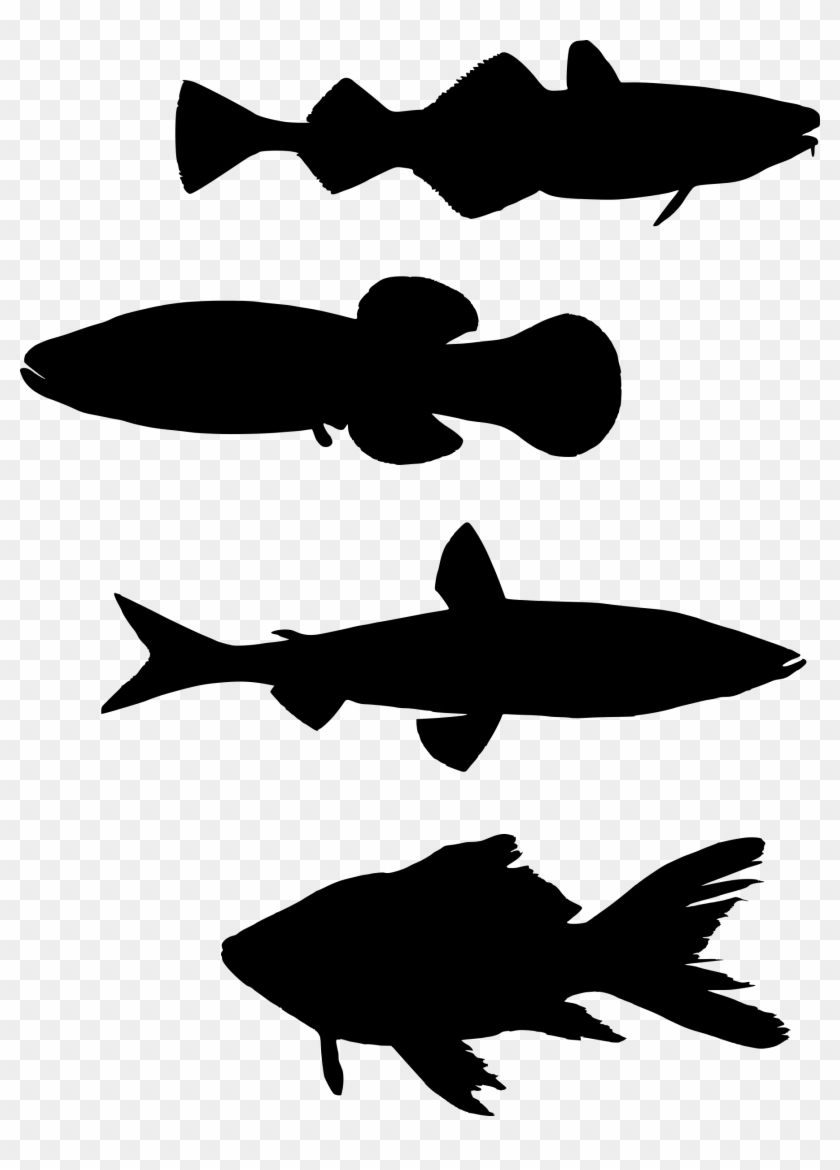 Fish Silhouette Shoaling And Schooling Computer Icons - School Of Fish Silhouette Png #1363724