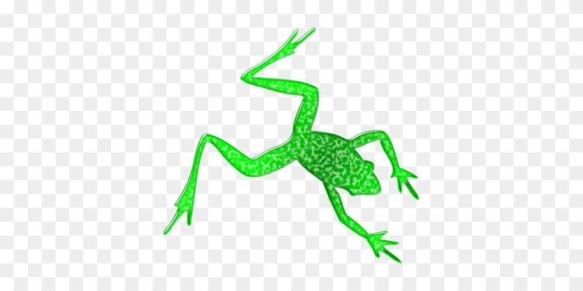 Tree Frog Animal Silhouettes - Rainforest Animals Silhouette #1368818