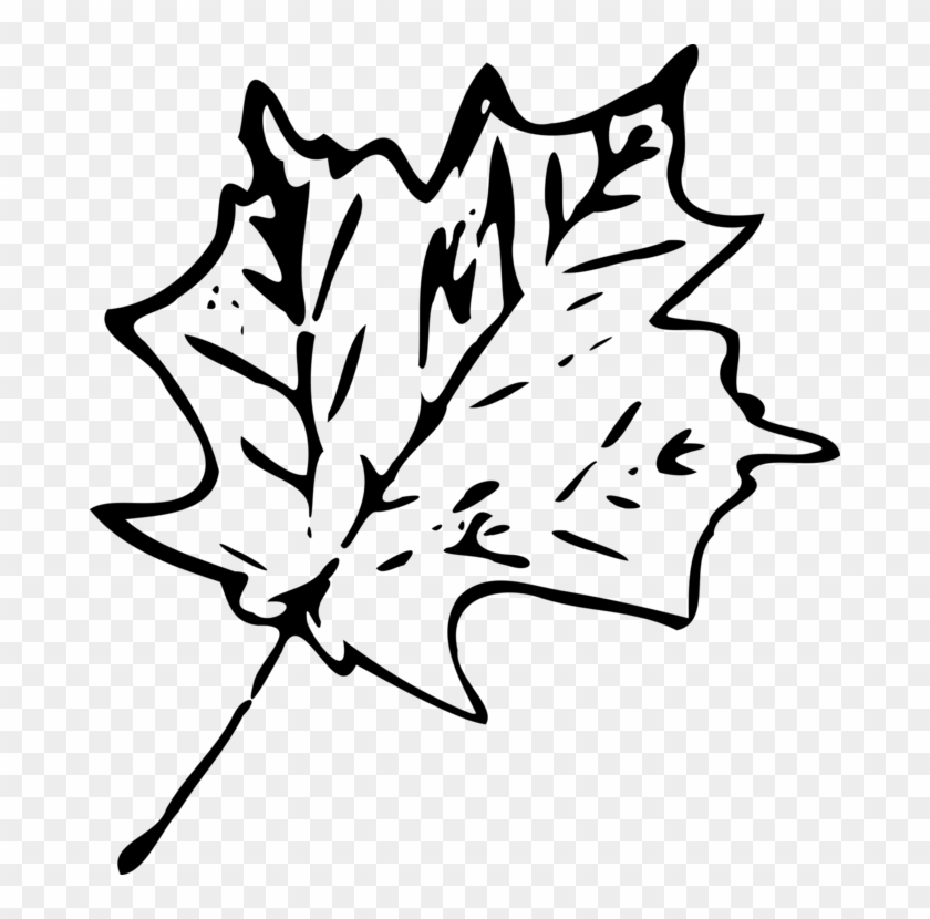 Autumn Leaf Color Drawing Maple Leaf - Autumn Leaves Png Black And White #1375721