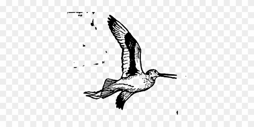 Line Art Bird Computer Icons Coloring Book Beak - Bird #1379364