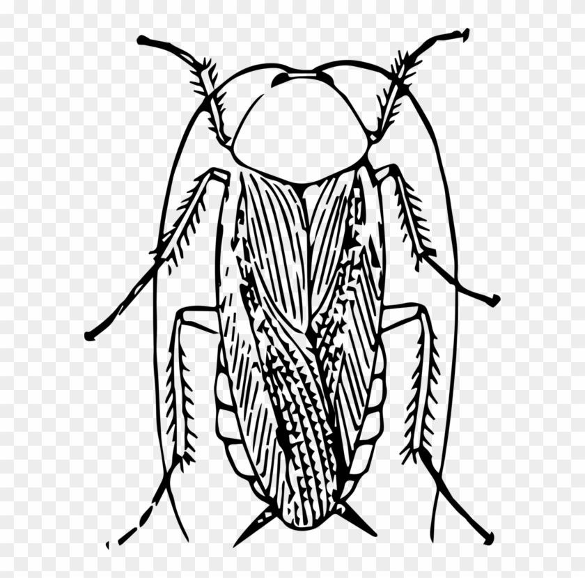 American Cockroach Black And White Insect Drawing - Cockroach Black And White #1389406