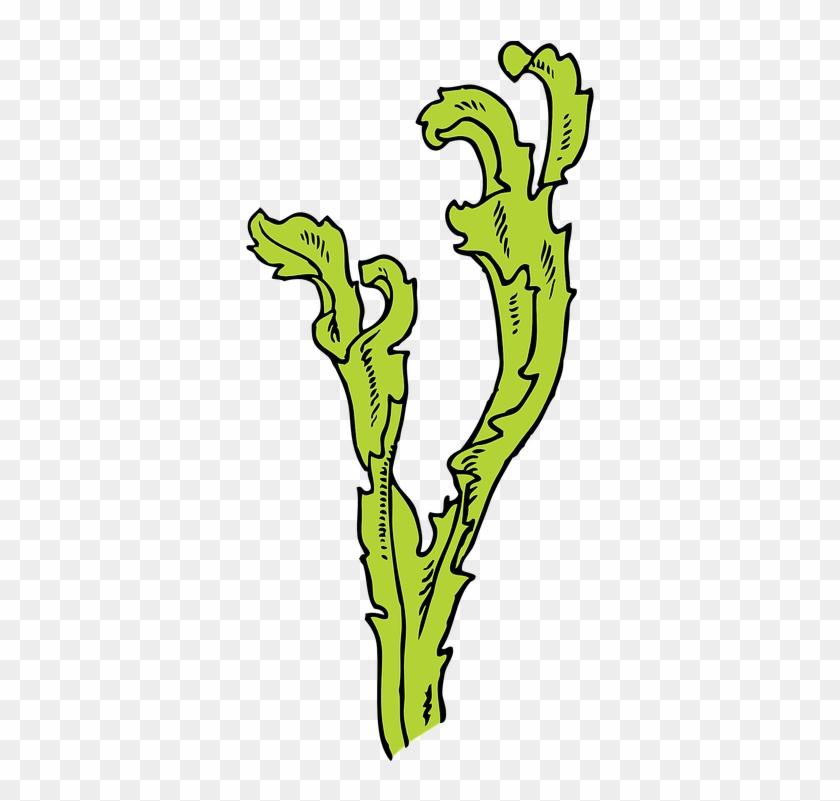 Algae Clipart Water Plant - Seaweed Clip Art #1391058
