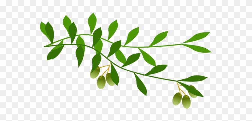 Olive Branch Leaf Laurel Wreath Tree Olive Branch Free Clip Art Free Transparent Png Clipart Images Download