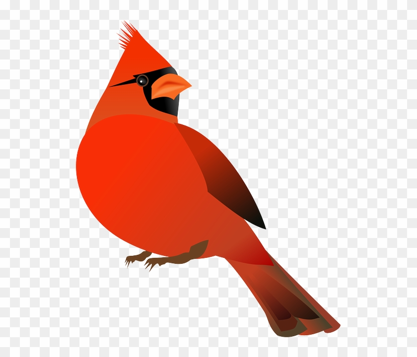 Free Image On Pixabay Cardinal Bird Cardinalidae - Cardinal Bird Cartoon #1394193