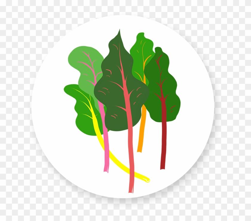 Rainbow Chard Leaf Vegetable Free Transparent Png Clipart Images Download