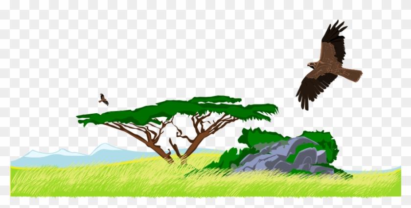 Steppe Clip Art - Jungle Clip Art #219859